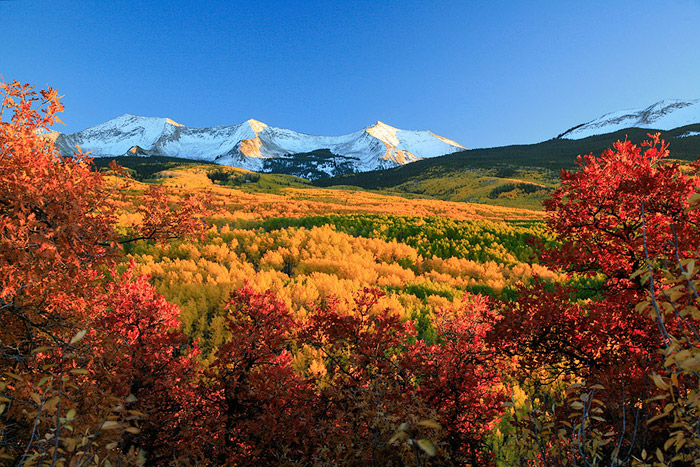 aspens, Kebler Pass, Colorado, trees, fall, red, orange, yel photo